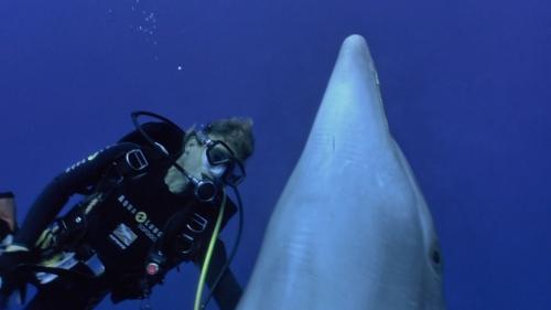 Die Delfine von Rangiroa